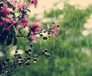primavara-ploaie